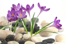 crocus-for-ABOUT-eating-disorder-TREATMENT-page